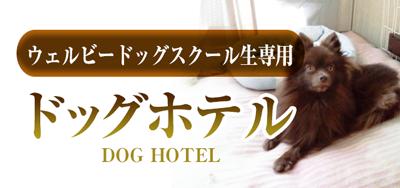 WELLBE DOG SCHOOL ( ウェルビードッグスクール)ドッグホテル